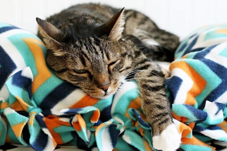 How to Make a Ridiculously Easy No-Sew Cat Bed