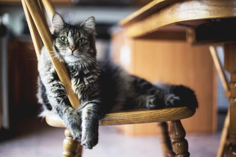 6 Great Reasons to Adopt an Adult Cat