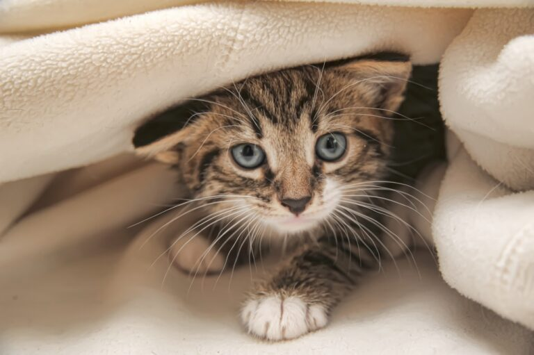 What You Should Know Before Adopting a Kitten