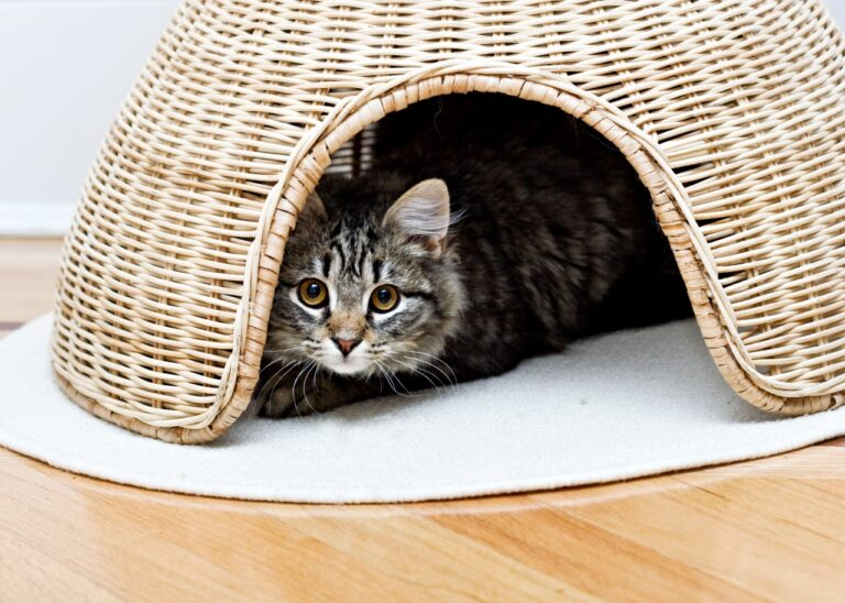 18 of the Best Eco-Friendly Cat Products