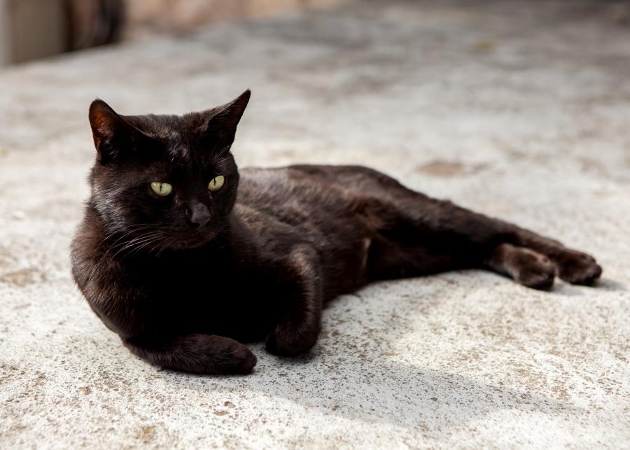 Cat on concrete floor