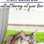 Cat urine from concrete