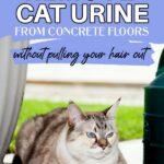Get rid of cat urine from concrete floor