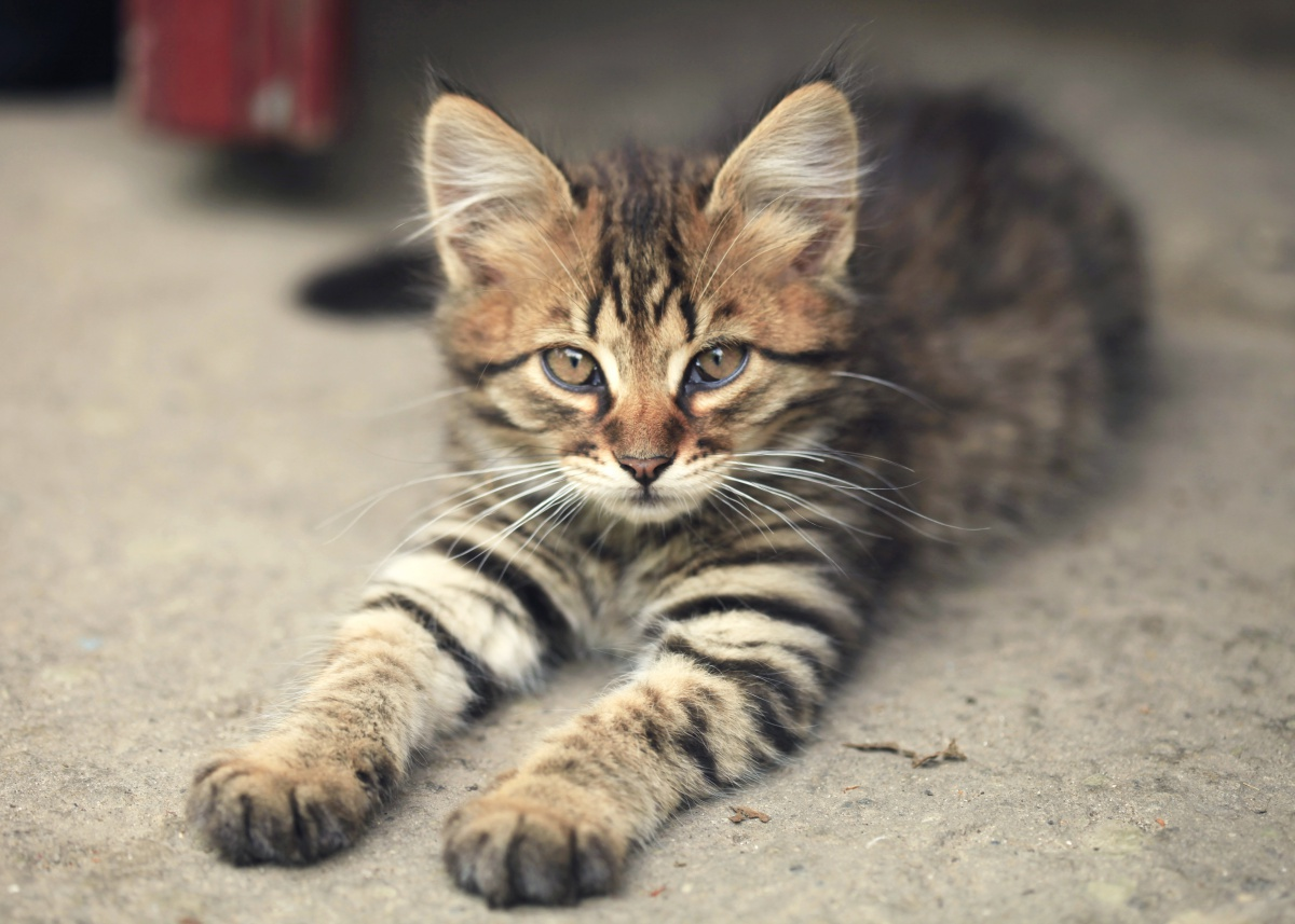 How to clean cat urine from concrete