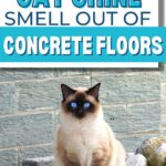 how to get cat urine smell out of concrete floors