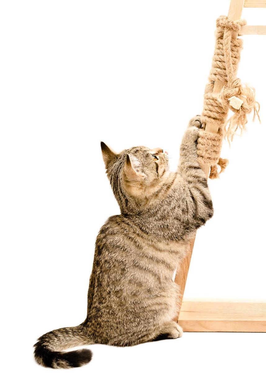 Cat declaw alternative