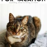 Preparing your cat for boarding