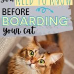 What to know before boarding your cat