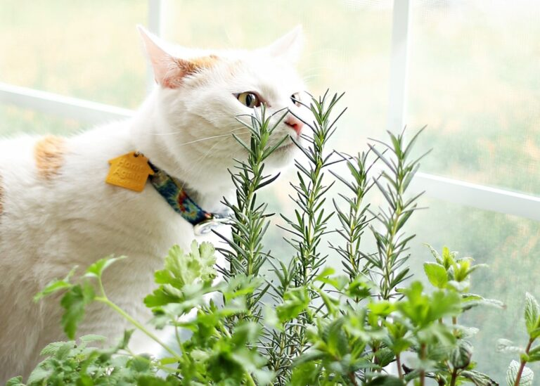 How to Make an Indoor Garden for Cats