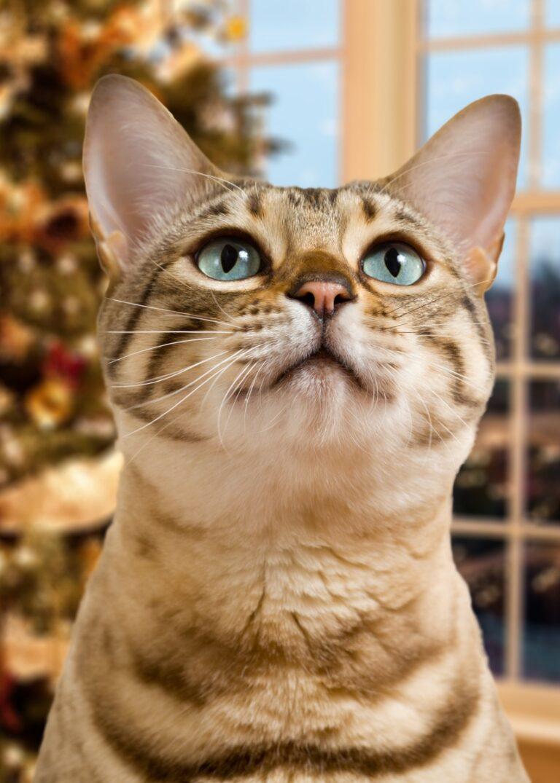 Surefire Ways to Cat-Proof Your Christmas Tree