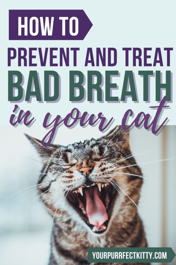 How to prevent and treat cat bad breath