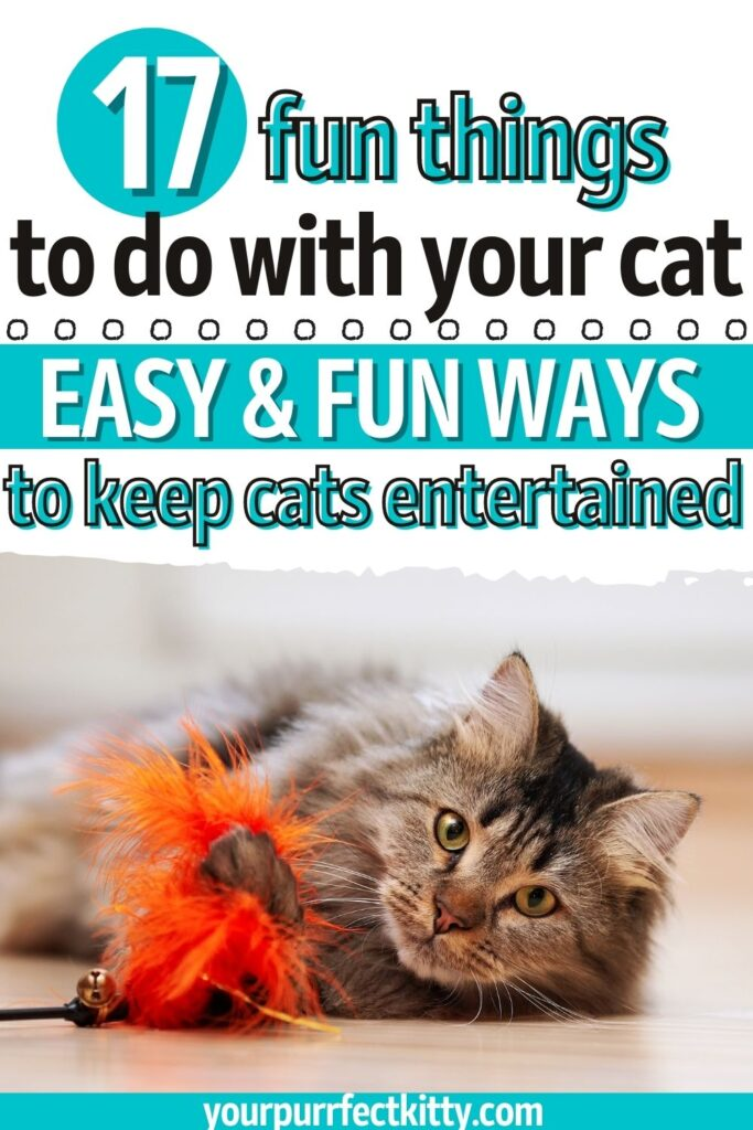Fun things to do with your cat