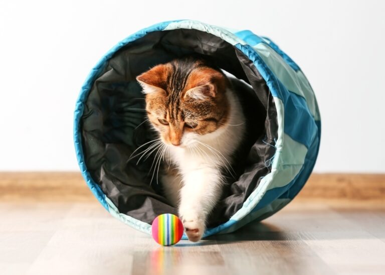 17 Easy Ways to Entertain Your Cat